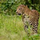 #Kabini: What do you do when the wild calls?
