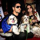 Bow wow! Dogs catwalk for a cause