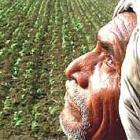 89 Gujarat farmers committed suicide in last four years: Govt