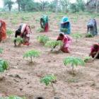 Orissa MNREGA funds: SC orders CBI probe
