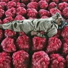 Nashik farmer gets 5 paise per kg for onions!