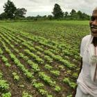 Why there will be delay in farm sector recovery