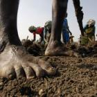 Acche din? Rural job scheme hits a new low