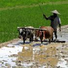Rain failure: Govt talks of crop contingency plans