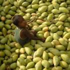 Mango exports to further dip this year