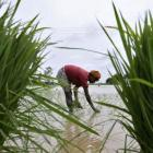 Father of Green Revolution on what Modi must do to revive farming