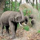 Chhattisgarh's elephantine problem