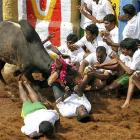 TN files caveat in SC to defend its ordinance on Jallikattu