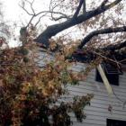 Family escapes as tree destroys house in Sandy-hit US