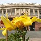 Breather for govt; Parliament to finally work on Tuesday