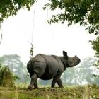 Gogoi seeks special force to protect Kaziranga rhinos