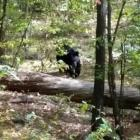 Last moments of Indian-origin hiker killed by a bear