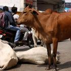 Dalits thrashed for skinning dead cow near crematorium in Gujarat