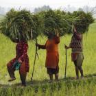 Jairam Ramesh: 2014 land Act will take us back to 1894!