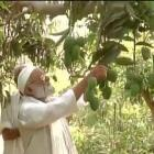 Aam aadmi Modi! Meet the farmer who named mango after PM