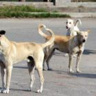 Kerala's decision to kill 'dangerous' dogs unlawful: Maneka