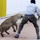 Spotted: Leopard strays into Bengaluru school on Sunday