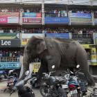 Elephant goes on a rampage in West Bengal