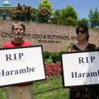 RIP Harambe: Outrage grows over gorilla's death at US zoo