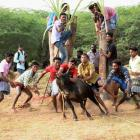 Police foil attempts to conduct Jallikattu
