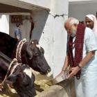 Modi provoked sentiments of gau rakshaks: Sibal