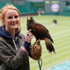 Avian star 'Rufus' patrols the skies during Wimbledon