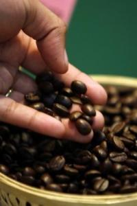 Natural calamities wreak havoc on spices and coffee plantations