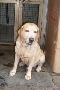 RIP! 26/11 hero dog Caesar passes away