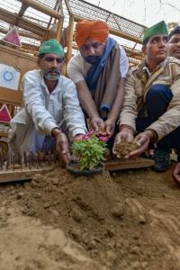 Farmers plant flowers in response to 'iron nails'