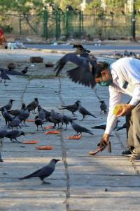 Over 1,000 bird deaths reported; Centre issues advisories