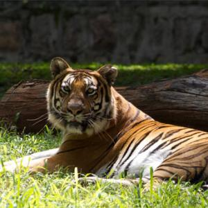 PHOTOS: The spectacular wildlife at Mysore zoo