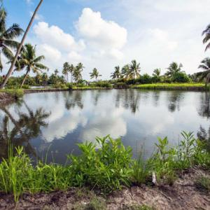 What's so magical about this tiny island in Kerala?