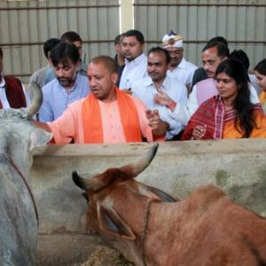 Equally committed to protecting human life, cows: Adityanath