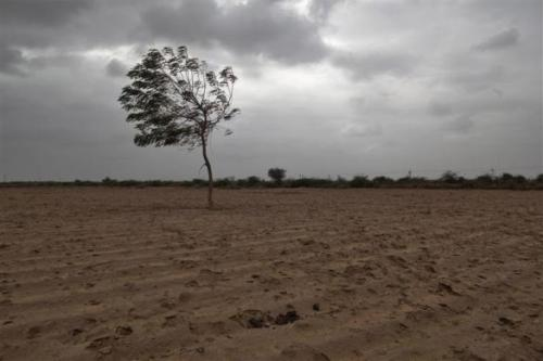 A dried agricultural farmland is pictured on the outskirts of Sami town in Gujarat.