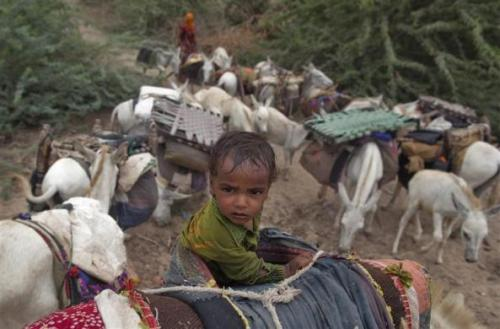 A child rides on a donkey as they migrate due to lack of water at Sami town in Gujarat.