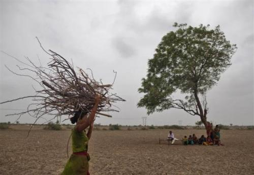 A village woman carries firewood as others rest under a tree after they migrated due to shortage of water on the outskirts of Sami town in Gujarat.
