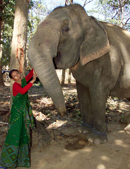 Parvati Barua, the only woman elephant-catcher in Asia, pats her pet.