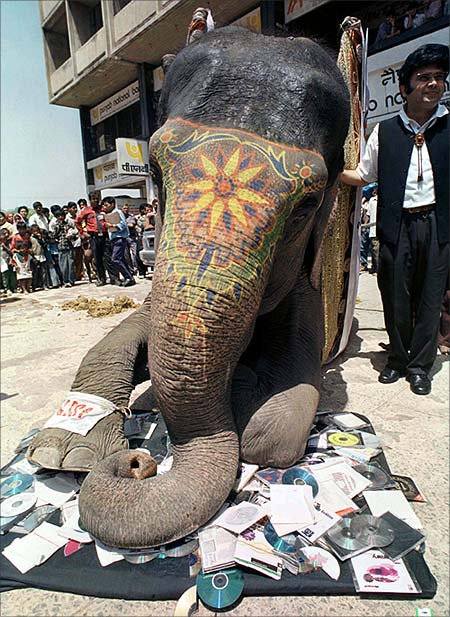 An elephant crushes compact discs containing pirated software, seized during recent anti-piracy raids, in New Delhi.