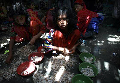 A girl sorts prawns at the main port located in the outskirts of the southern city of Karachi.