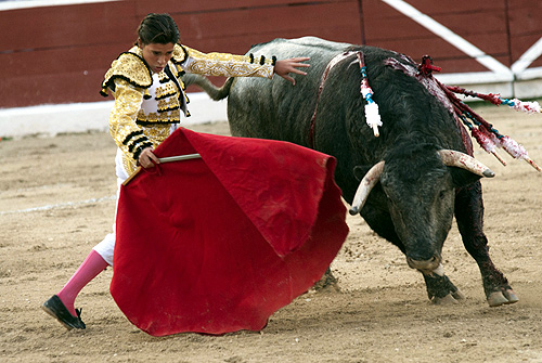 Mexican matador Michelito Lagravere performs a pass to a bull during a bullfight at the Plaza Monumental bullring in Merida.