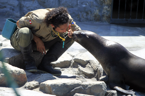 Bam bam, a 16-month-old sea lion rescued a year ago from the city's sea shore, plays with a worker at the Parque de las Leyendas Zoo in Lima.