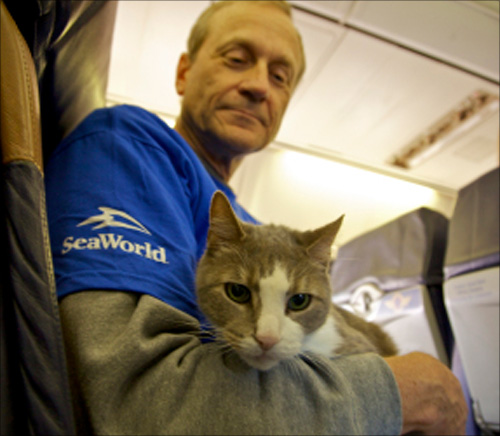 Hurricane sandy affected animals flown to safe haven on Southwest Airlines charter flight.