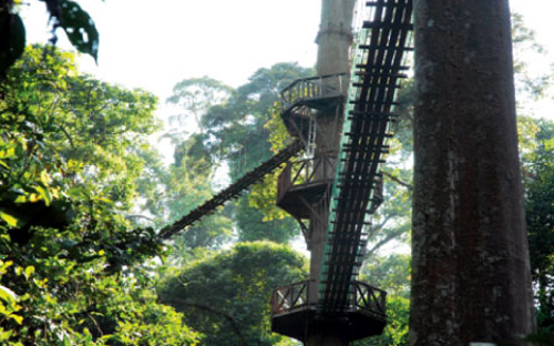 Tree Top Canopy Walk.