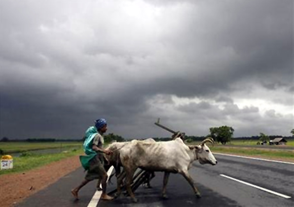 A farmer and his bullocks cross a highway against the backdrop of monsoon clouds in Singur, about 50 km northwest of Kolkata.