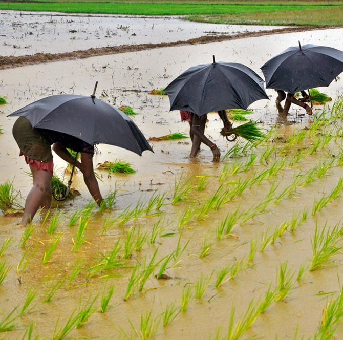 'Below-normal rains may not lead to a spike in inflation'