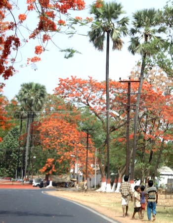 As the mercury soars, traffic thins under the Gulmohar trees in the city's ministerial enclave