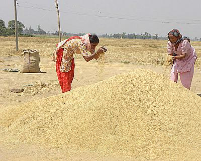 Women sift grain near a farm in Ajnala