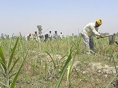 Farmers at work in Bhatala