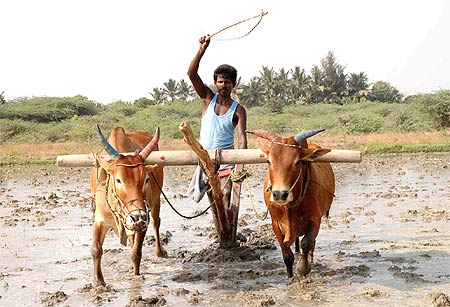 Muthu, like most farmers, is a worried man