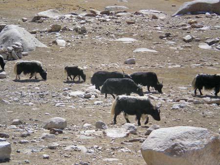 A Himalayan idyll?